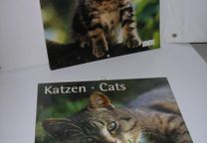 Gatos - Calendários de Gatos