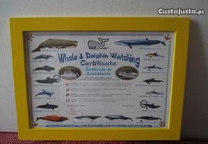 Quadro com referência ao avistamento de Baleias