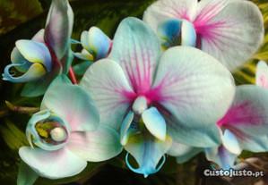 Orquídeas invulgares - Azul, verde, lilás