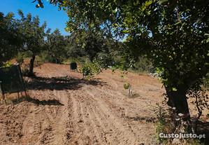Terreno Agricola Estoi - Monte Trigo