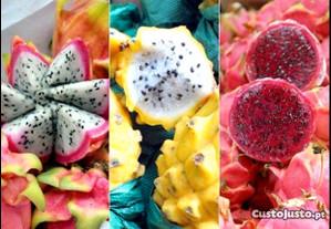Pitaya s plantas enraizadas