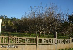 2 Lotes de Terreno para construção em Alvaiázere