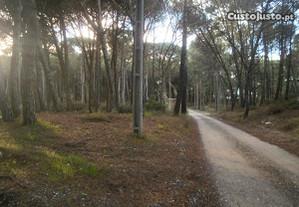 Terreno rústico com pinheiros - Janas - Sintra