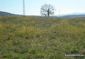 Terreno com 8,6 hectares em Mogadouro
