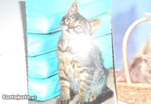 Postais antigos ( gatos) de coleção