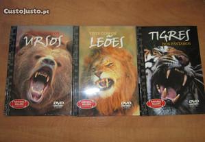 DVD animais