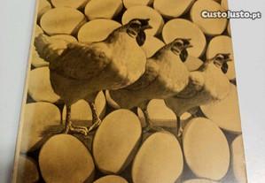Galinhas e ovos