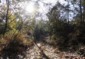 terreno em curvos esposende
