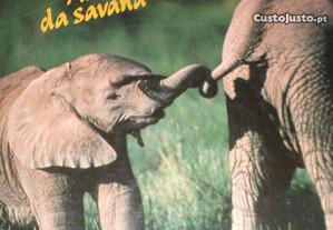Vida selvagem / animais da savana