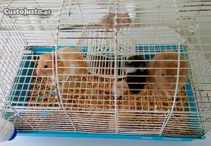 Gaiola com 2 hamsters