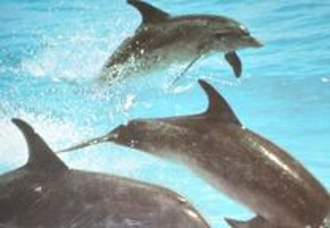 Vida selvagem / animais do oceano