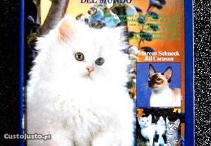 Gatos Del Mundo