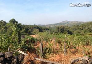 Terreno de Cultivo em Parada do Pinhão ( Justes)