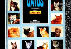 Todos os gatos