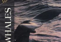 Eco Voyage Whales [CD]