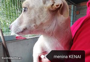 Kenai e Koda (fêmeas, 3 meses, porte médio)