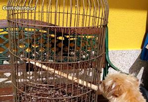 Gaiola antiga de pássaros