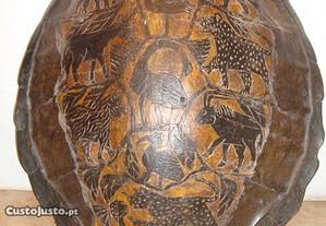 Carapaça de Tartaruga