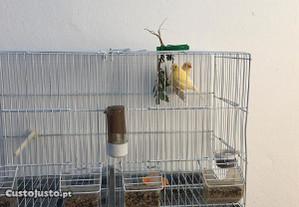 Casal de canários amarelos (M/F)+ gaiola dupla de