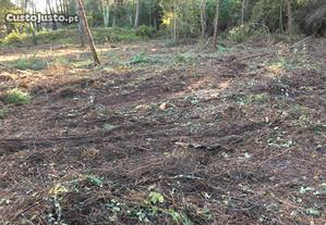 Terreno de cultivo em Chafé
