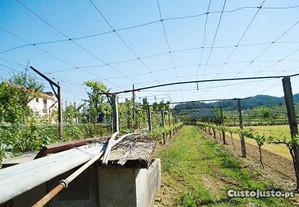 Quinta central plana boa exposição Ponte GMR