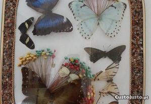 QUADRO borboletas naturais (artesanato Brasil)