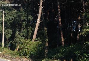 Madeireiro florestal madeira.