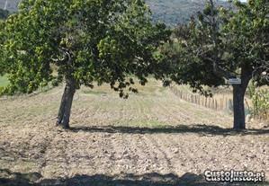 Terreno em Penedono (Viseu)
