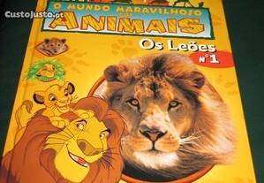 Animais - Leões