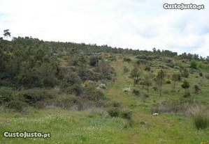 Terreno (pinhal) em Soutelo - Mogadouro