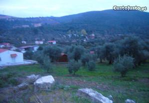 Terreno c/ Casa em ruínas, e olival