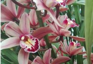 Orquídea exterior
