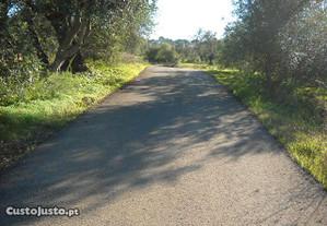 Terreno Agrícola Santa Barbara de Nexe