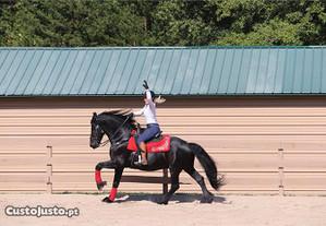 Cavalos do Frisão para Adoção