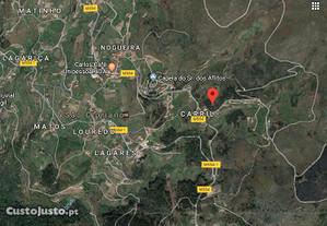 Terreno com 10.000m2 - São Cipriano