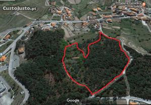 Terreno em Mões Castro Daire, com 27308 M2