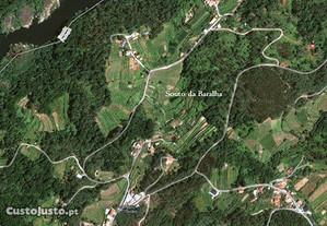 Terreno rústico composto por lameiro e pinhal