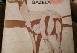 Ali João Lúcio e a Gazela