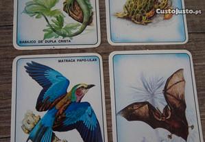 Calendários de animais